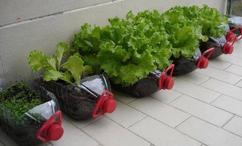 10 vật dụng bạn có thể tận dụng để trồng rau sạch tại nhà