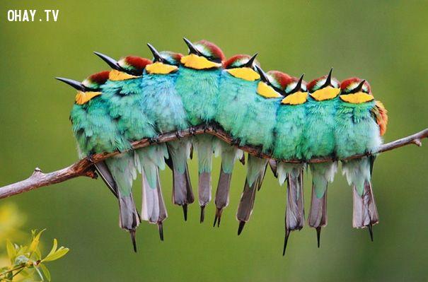 Cuộc sống quả là chật chội! Bạn đang thấy một con sâu sặc sỡ hay  những chú chim đáng yêu.