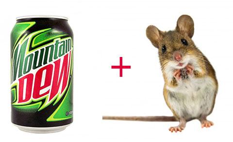 Điều gì xảy ra khi để một con chuột vào Mountain Dew trong 30 ngày?