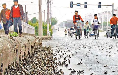 Hàng trăm ngàn con ễnh ương xuất hiện, sắp có động đất ở Tây Ninh?