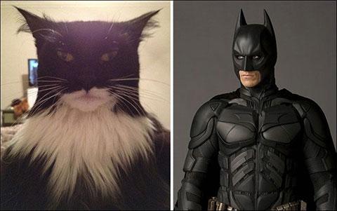 10 chú mèo trông giống người nổi tiếng đến mức đáng ngạc nhiên