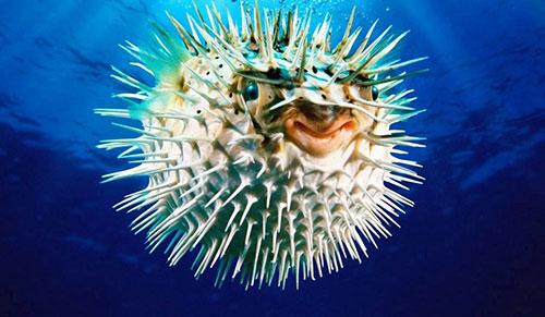 9 loài vật với khả năng giết người đáng kinh ngạc
