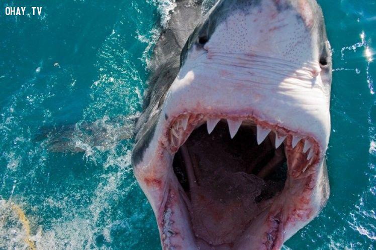ảnh động vật đáng sợ,quái vật,loài vật đáng sợ
