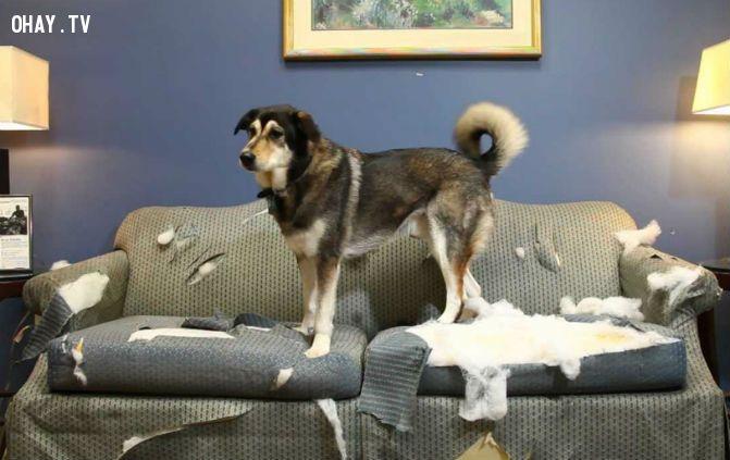 ảnh thú cưng,chó và chủ,nuôi chó,chó cưng