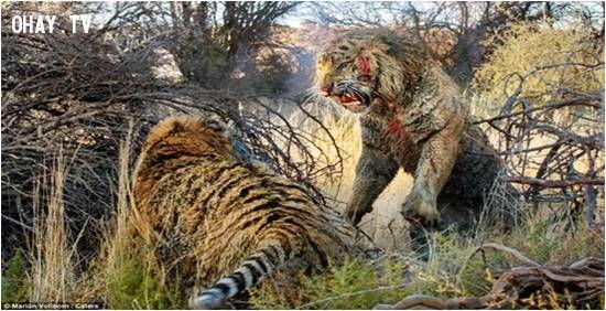 ảnh con người,sự tàn ác,con người và con vật