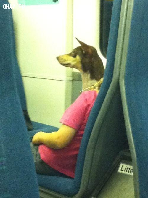 Chó đi làm, suy ngẫm, bạn nghĩ gì, đánh lừa thị giác