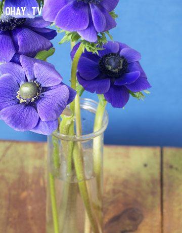 Hoa tươi lâu nhờ vodka và đường