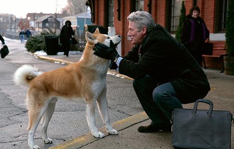 Câu chuyện cảm động về chú chó Hachiko