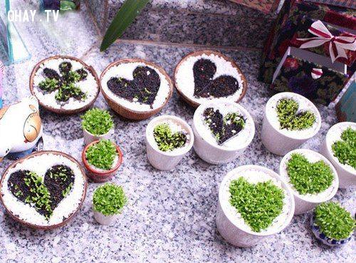 quà handmade, handmade, lãng mạn, tình cảm chân thành, phát sáng , món quà, cây trái tim, dễ trồng