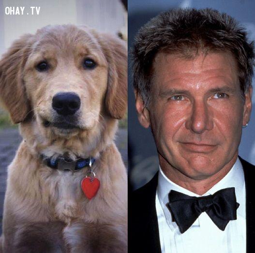 Diễn viên Harrison Ford