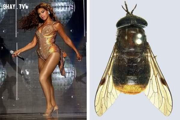 ảnh vòng 3,Beyonce,có thể bạn chưa biết