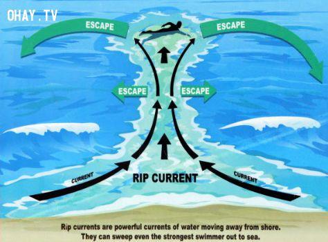 Sống sót, kĩ năng sinh tồn trong thủy triều