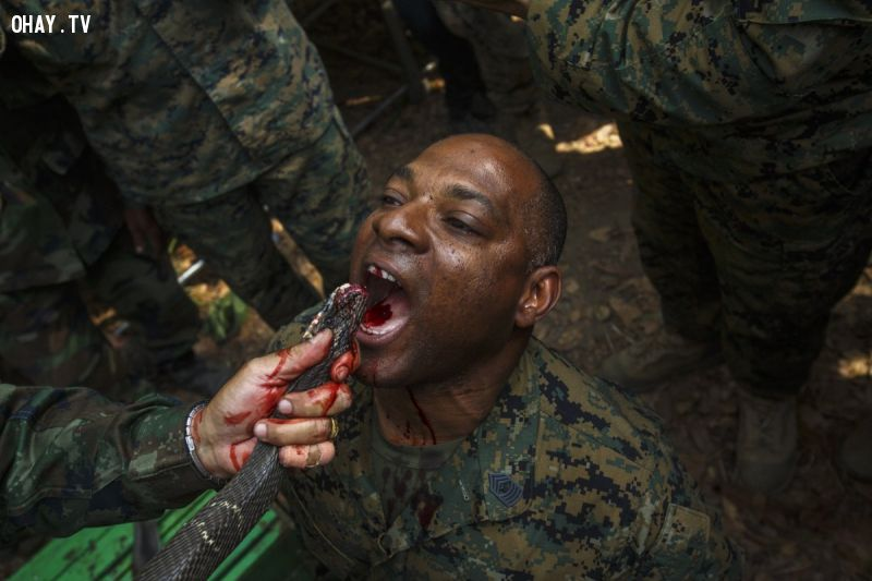 ảnh đào tạo quân sự,quân sự,đào tạo binh sĩ,quân sự,huấn luyện quân sự
