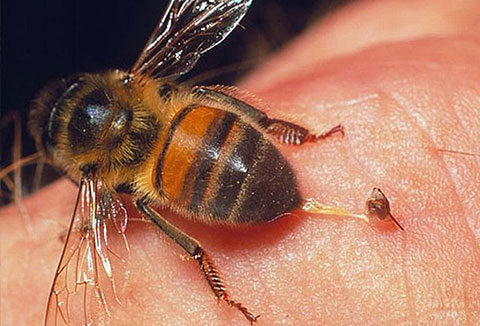 4 bước để đối phó khi bị đàn ong tấn công