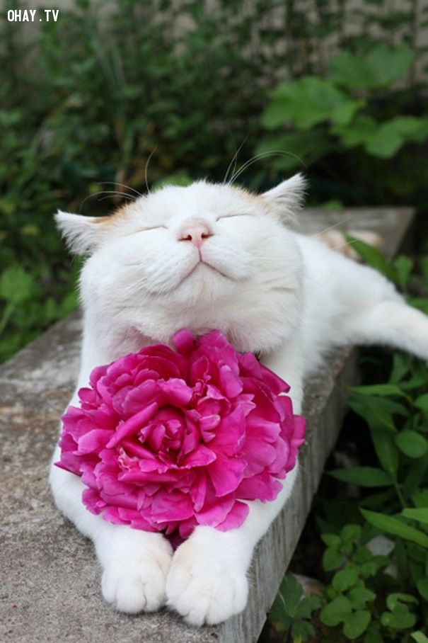 ảnh Mèo cười,Những chú mèo đáng yêu,Mèo biết cười,vật nuôi