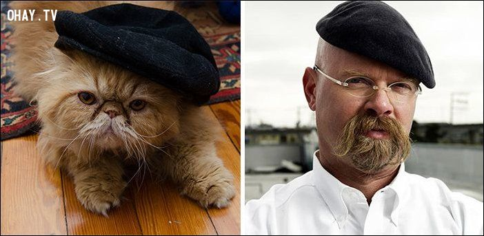 chú mèo trông giống người nổi tiếng