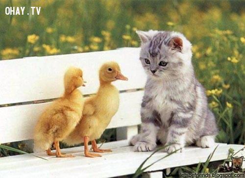 Chú chim và mèo