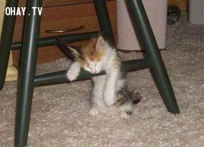 ảnh tỉnh táo,tỉnh ngủ,buồn ngủ,tránh buồn ngủ,cách để tỉnh ngủ,cách tỉnh táo