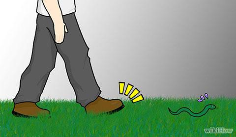 10 điều cần biết nếu bạn không muốn bị rắn cắn