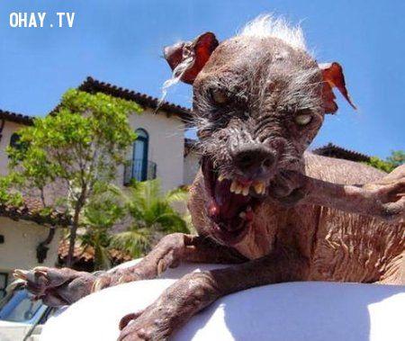 chó xấu nhất hành tinh