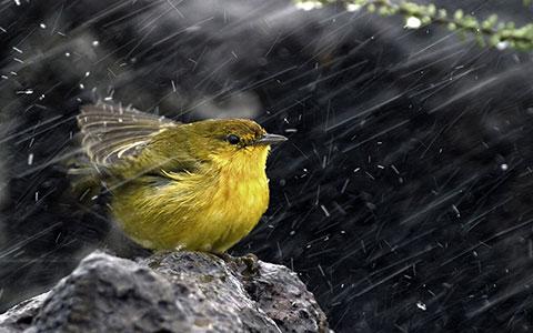 5 điều có thể bạn chưa biết về những cơn mưa