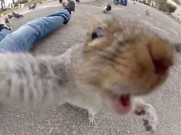 ảnh ảnh tự sướng,ảnh selfie