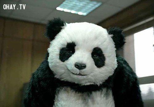 ảnh quảng cáo hài hước,quảng cáo hay,quảng cáo pho mát,pho mát panda