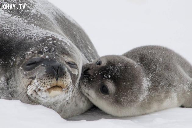 ảnh động vật,đáng yêu,dễ thương
