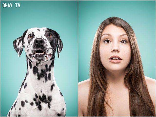 ảnh bộ ảnh hài hước,giống nhau,biểu cảm giống nhau,biểu cảm,nét mặt giống nhau,The Dog People,Ines Opifanti