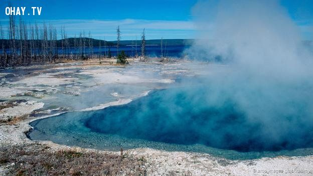 Some bacteria can live in hot springs
