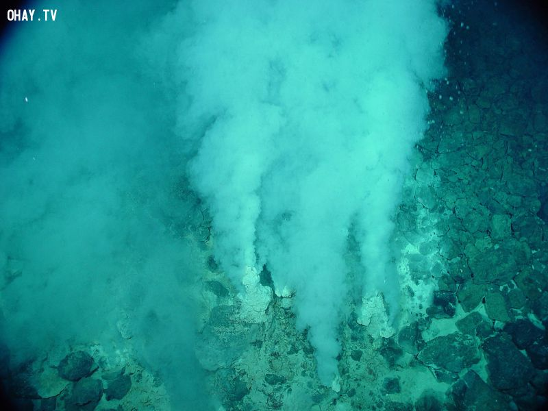 Hydrothermal vents at the sea