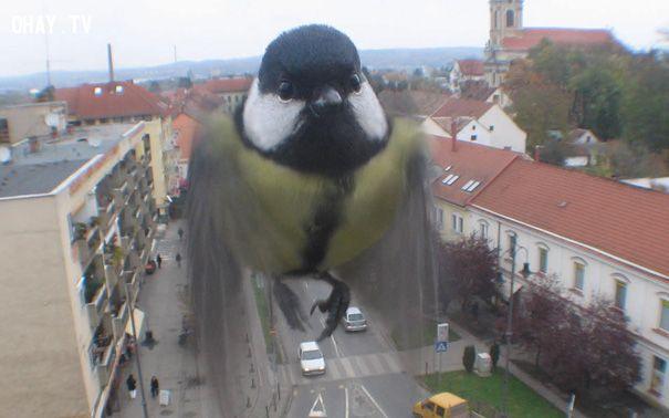 Chú chim không lồ