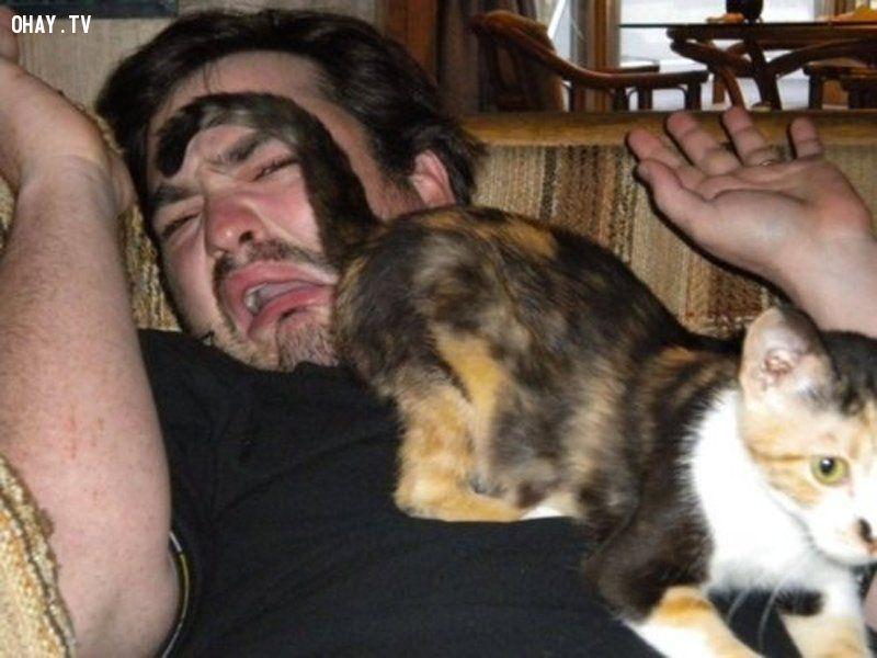 ảnh loài mèo,nuôi mèo,thú cưng