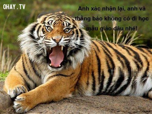 hổ, báo
