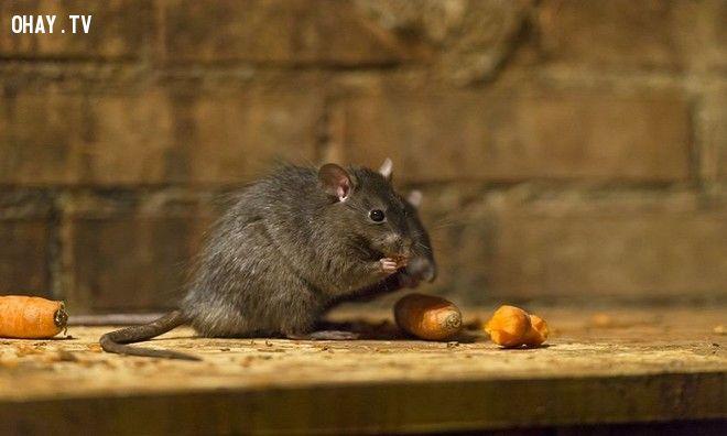 ảnh động vật,động vật thông minh,thông minh