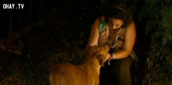 Vượt 6km chú chó thông minh xin thức ăn cho gia đình của mình