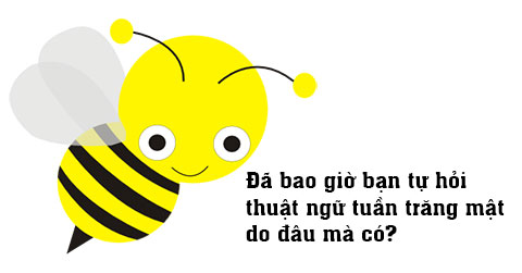 10 điều thú vị về loài ong không phải ai cũng biết