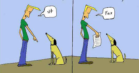 5 cách huấn luyện cún (chó) cưng của bạn