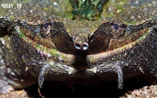4 sinh vật khiến bạn phải rùng mình khi nhìn thấy - Bạn có dám xem?
