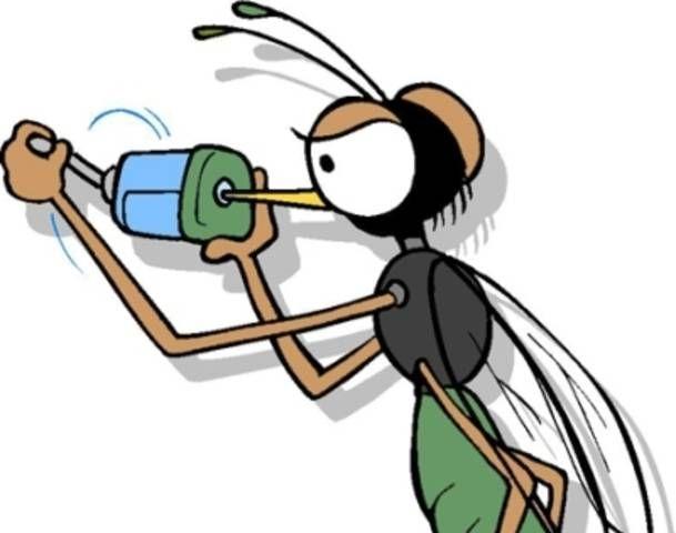 ảnh muỗi,loài muỗi,có thể bạn chưa biết,fact