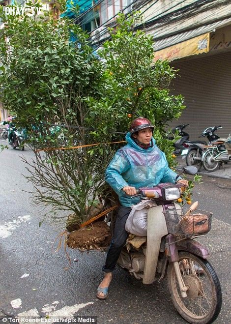 ảnh giao thông Việt Nam,Daily Star