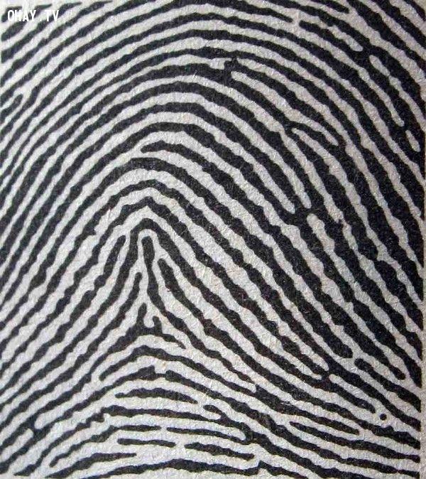 Dấu vân tay tiết lộ điều gì về bạn ?