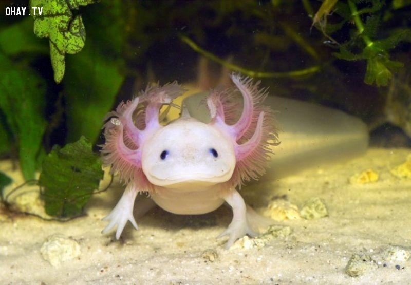 ảnh Rồng biển xanh,chó giẻ lau,động vật kỳ lạ,thế giới động vật