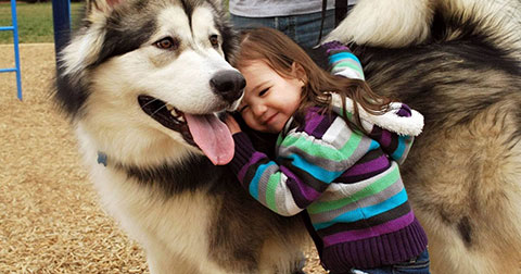8 lợi ích từ việc nuôi thú cưng có thể bạn chưa biết
