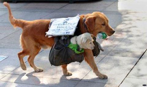Chùm ảnh mẹ con chó cực dễ thương