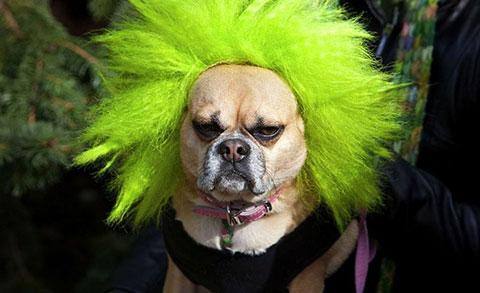 Chết cười với 22 kiểu hóa trang cho chó cực bá đạo