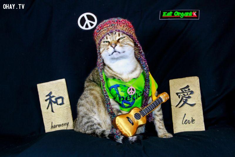 ảnh mèo booboo,thời trang sành điệu,loài mèo