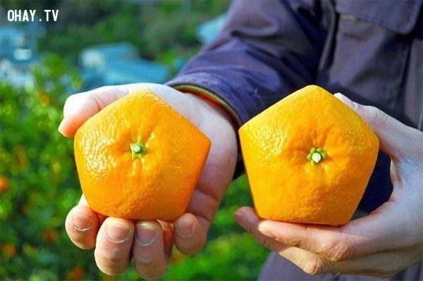 ảnh hình thù kì lạ,hoa quả