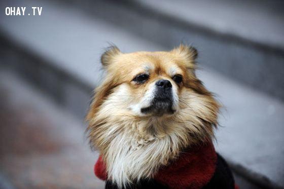 ảnh Những chú chó trung thành,chó trung thành,chú chó trung thành,cún cưng