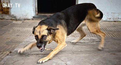 Bình tĩnh khi gặp chó dữ
